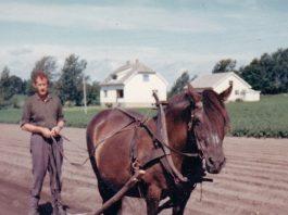 Trygve Sandaker and the dole horse Rebergsokka in the 1960s. | Photo used by permission - copyright the Sandaker family.