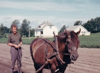 Trygve Sandaker and the dole horse Rebergsokka in the 1960s. | Photo used by permission - copyright the Sandaker family.