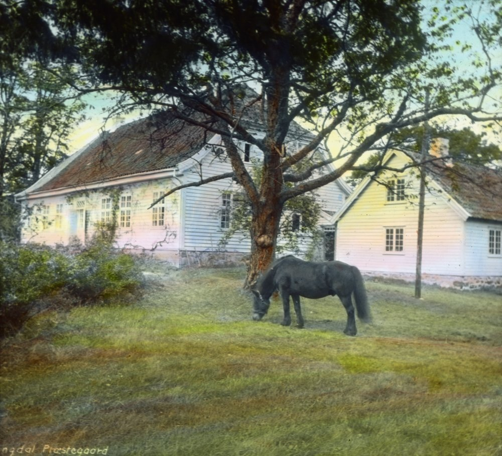 The working day is over. Norwegian Dole horse. Lyngdal parsonage in 1929. Lyngdal, Agder, Norway. Hand-coloured photo. | Photo: Anders Beer Wilse - digitaltmuseum.no DEX_W_00453 - CC BY.