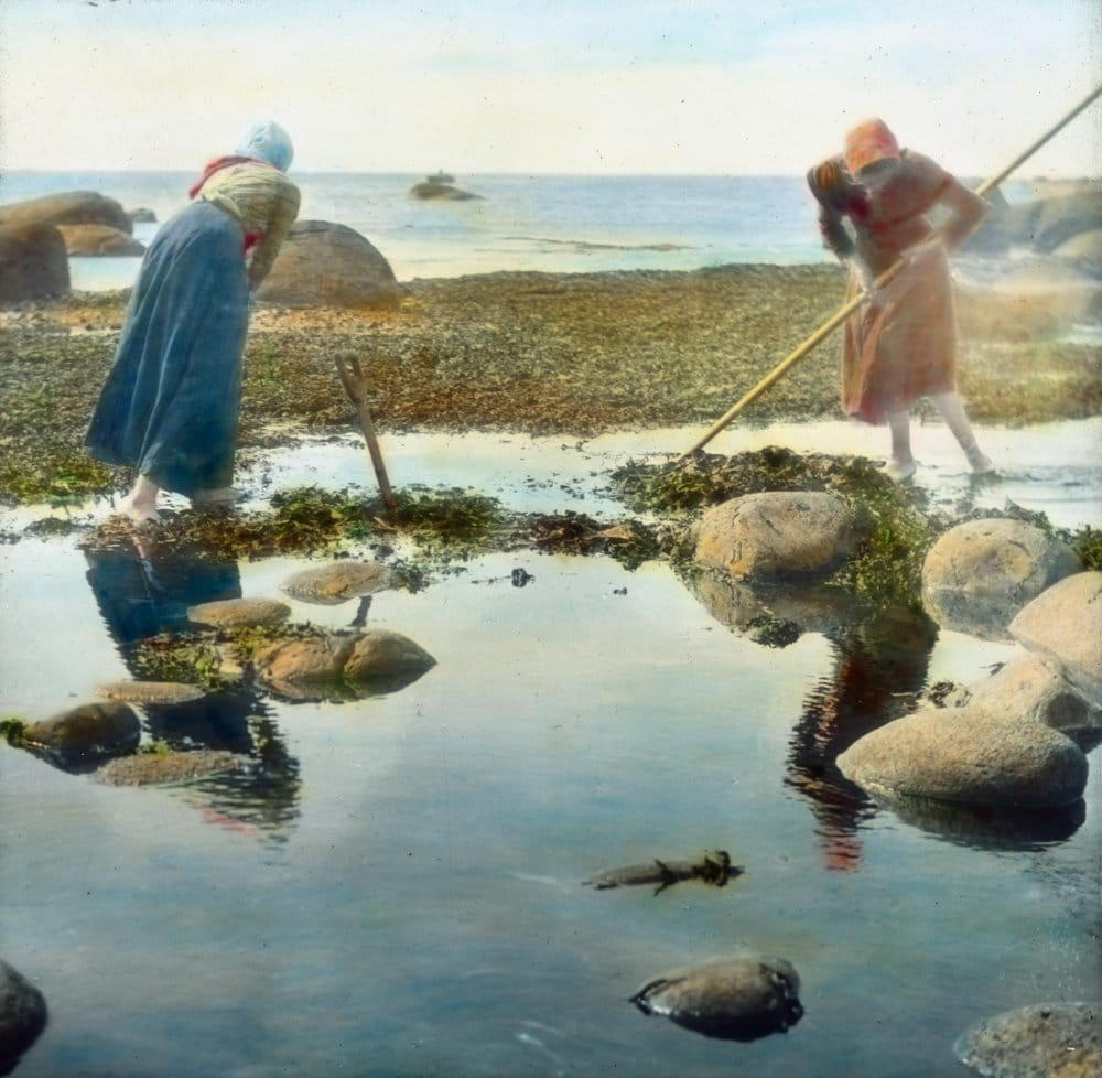 Two women collecting seaweed to be used as fooder for the domestic animals. The location is Lista, Farsund, Agder, Norway. Hand-coloured photo - taken in 1912.   Photo: Anders Beer Wilse - digitaltmuseum.no DEX_W_00564 - cc by.