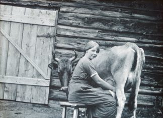 Summer pasture: a young Norwegian milkmaid - seterbudeie - milking the cow somewhere in the Norwegian mountains. From the milk, she would make both cheese and butter. | Photo: Anders Beer Wilse - digitaltmuseum.no DEX_W_00615 - CC BY.