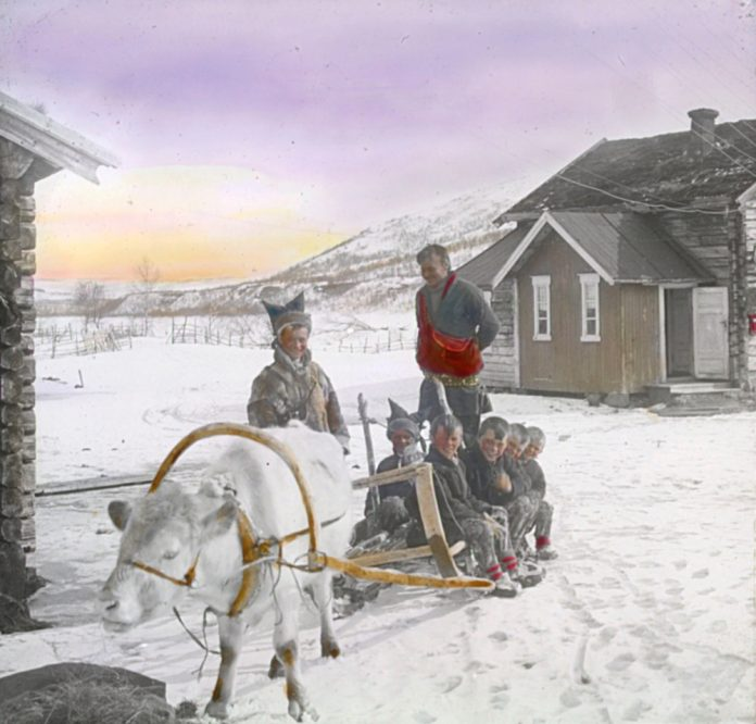 Who said that the Saami people had no sense of humour? A typical Saami sledge - and a calf wearing the harness - instead of the typical reindeer. The location is Sirma, Tana, Finnmark, Norway. Hand-coloured photo. | Photo: Alf Schrøder co - digitaltmuseum.no FBib.01005-045 - public domain. - digitaltmuseum.no FBib.01005-045 - public domain.