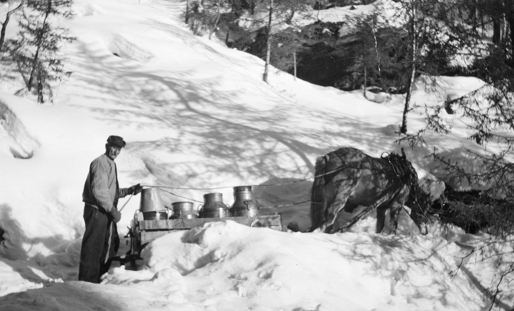 The Norwegian men did also contribute: O.K. Flaten and his horse on a cold winter's day - transporting water in large metal milk churns. | Photo: Unknown domkirkeodden - digitaltmuseum.no HHB-15719 - public domain.