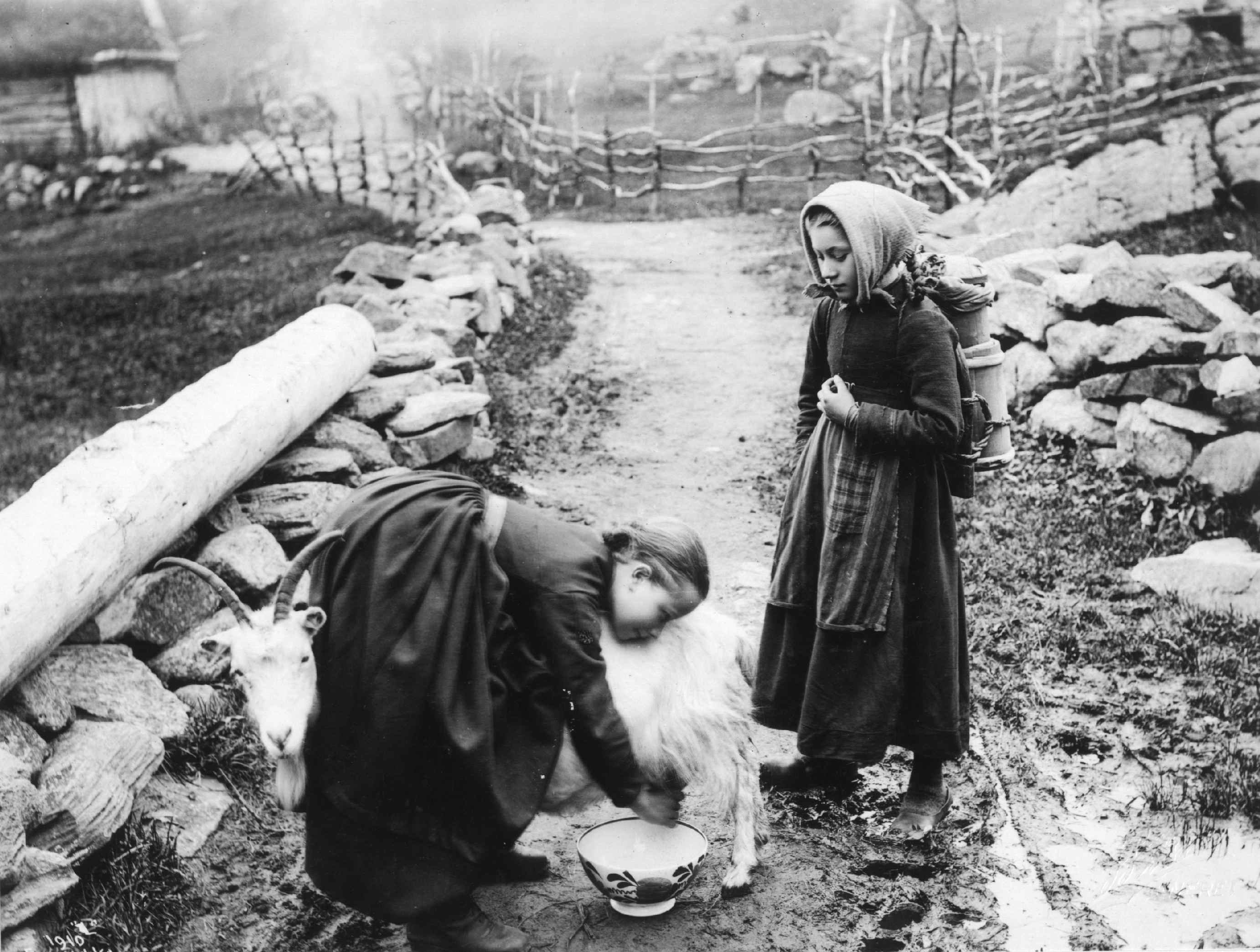 A young girl is milking a goat while her friend is watching. Notice the wooden container the girl on the right carries on her back. Maybe made for transporting milk? The photo is from around 1900 - and the location is Odda, Hordaland, Norway. | Photo: Unknown Norsk Folkemuseum - digitaltmuseum.no NF.06669-004 - public domain.