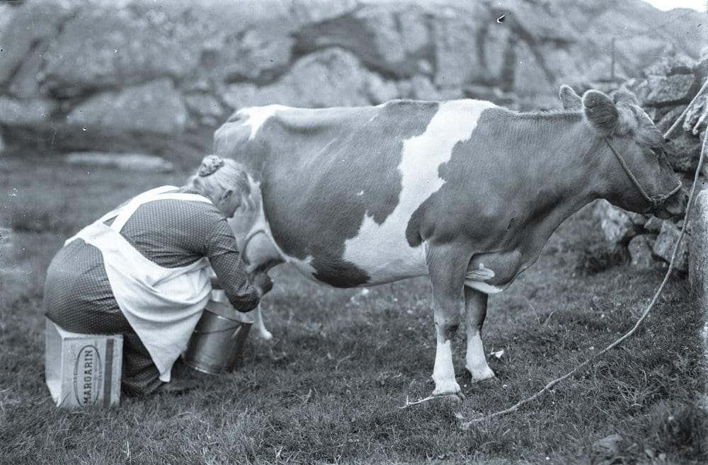 Food history | milk from the domesticated animals | Norway