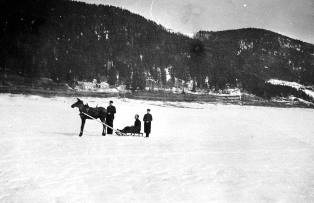 From the left: Andreas Løvstuen, Magne Løvstuen on the sledge and Arne Løvstuen - with their domesticated moose in 1939/40. The location is Løvstuen, Brøttum, Ringsaker, Hedmark, Norway. | Photo: Unknown domkirkeodden - digitaltmuseum.no 0412-02379 - public domain.