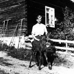 Magne Løvstuen with his domesticated moose in 1939. The location is Løvstuen, Brøttum, Ringsaker, Hedmark, Norway. | Photo: Unknown domkirkeodden - digitaltmuseum.no 0412-02395 - public domain.