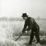 Karl Galaasen (1874-1962) cutting marsh grass on the ice - in November 1920. Frosktjønna, Galåsen, Trysil, Hedmark, Norway. | Photo: Haakon Garaasen - Trysil Engerdal museum - digitaltmuseum.no 0428-0000-00726 - public domain.