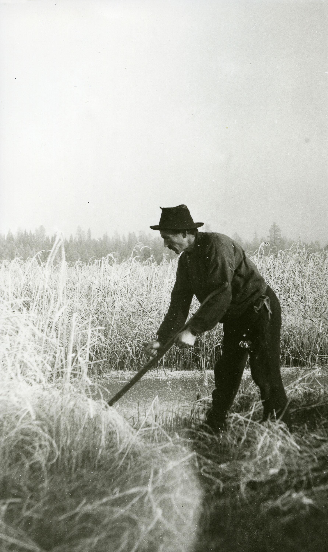 Karl Galaasen (1874-1962) cutting marsh grass on the ice - in November 1920. Frosktjønna, Galåsen, Trysil, Hedmark, Norway. | Photo: Haakon Garaasen - Trysil Engerdal museum - digitaltmuseum.no 0428-0000-00726 - public domain.