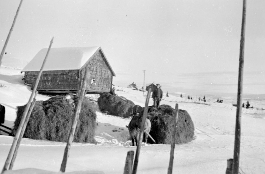 Bringing home the winter hay. Taken at the summer pasture location of the Freng farm - at Sjusjøen, Ringsaker, Hedmark, Norway. | Photo: Unknown domkirkeodden - digitaltmuseum.no 0412-02327 - public domain.