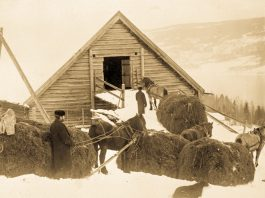 Bringing home the winter hay.   Photo: Unknown domkirkeodden - digitaltmuseum.no 0412-08712 - public domain.