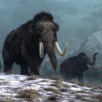 Woolly mammoths.  | © Daniel - stock.adobe.com.