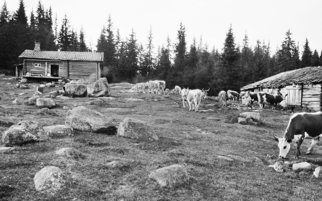 Homestead | how machinery changed the look of the farm | Norway