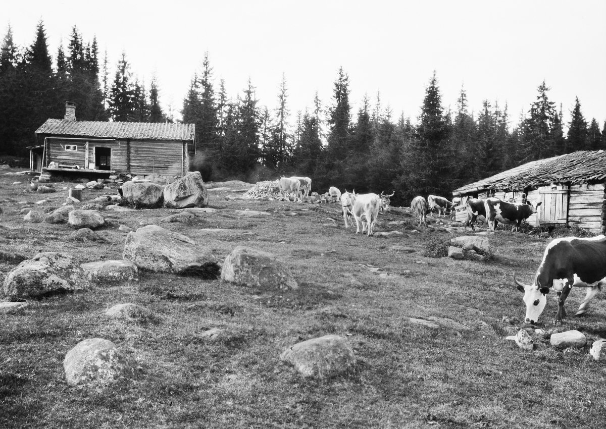 The summer pasture farm of Fagerliseter, located in Nordmarka, Ringerike, Buskerud, Norway. Photo taken in 1928. | Photo: Anders Beer Wilse - Oslo Museum cc pdm.