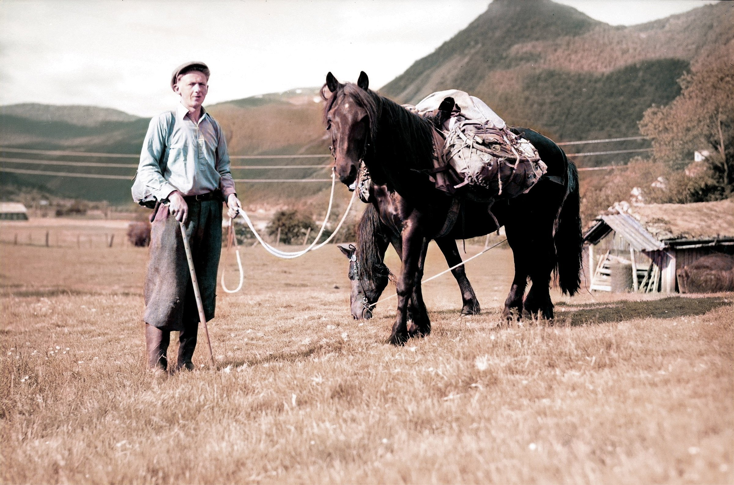 Man with his packhorses in Valle, Setesdal, Agder, Norway - in 1948. | Photo: Mittet & Co AS DeOldify cc pdm.