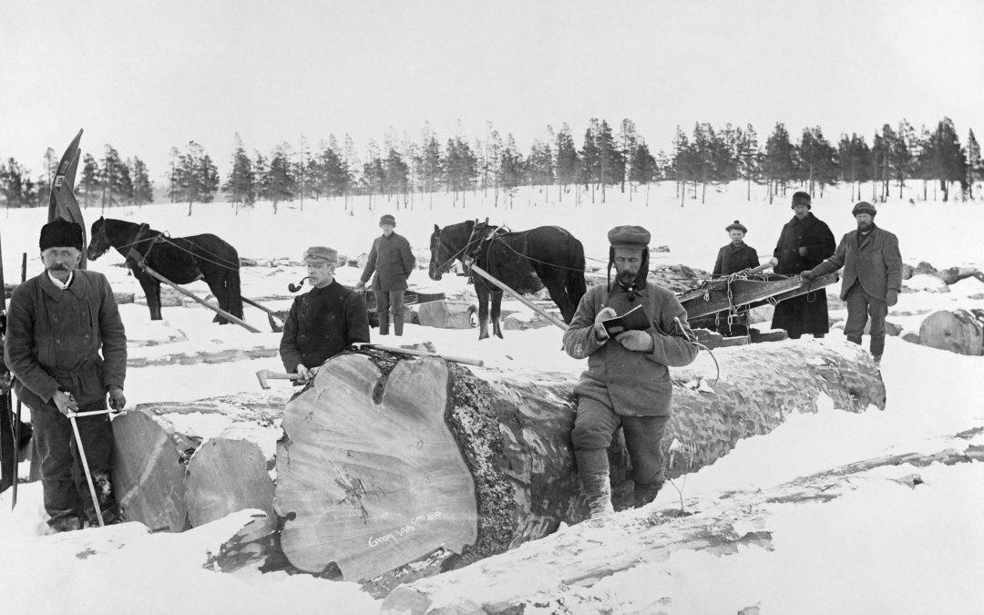 Vintage photos | the Norwegian farm horse #2 | Norway